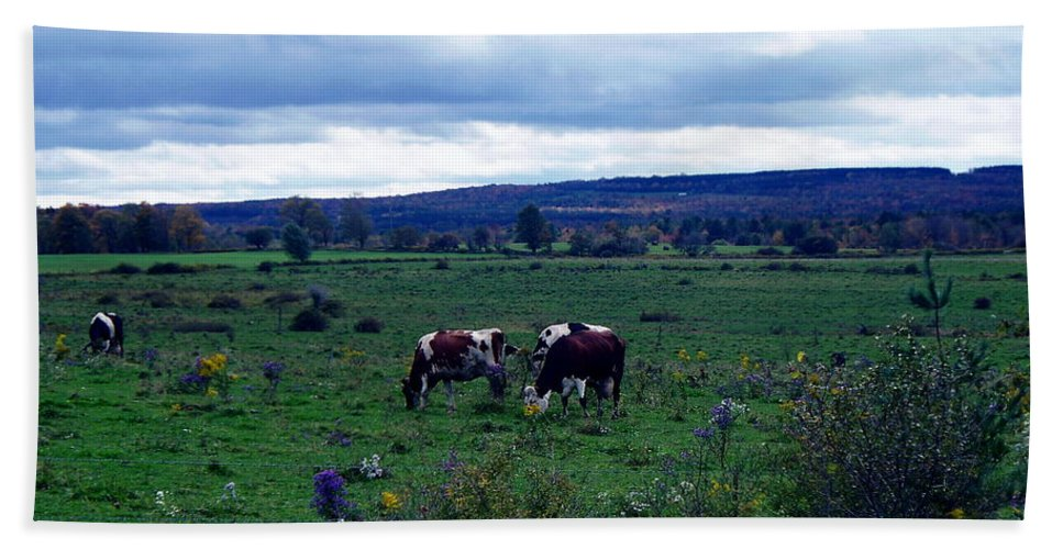 New York Hand Towel featuring the photograph Cattle At Pasture by Christian Mattison