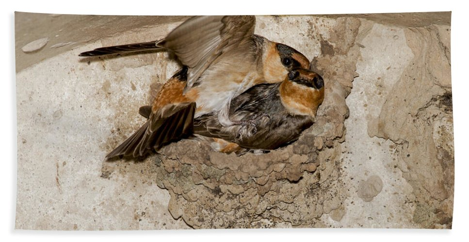 Cave Swallow Hand Towel featuring the photograph Cave Swallows by Anthony Mercieca