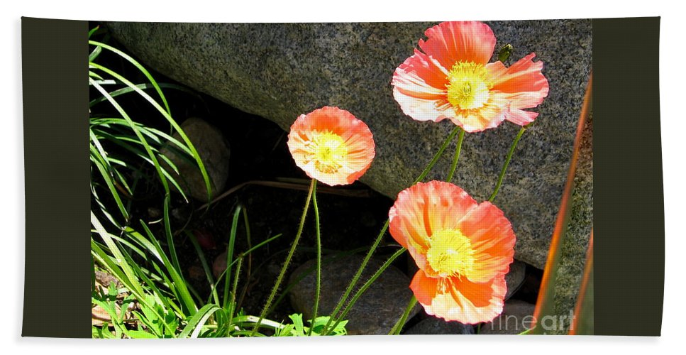 Cave Bath Sheet featuring the photograph Cavy Poppies by Phyllis Kaltenbach