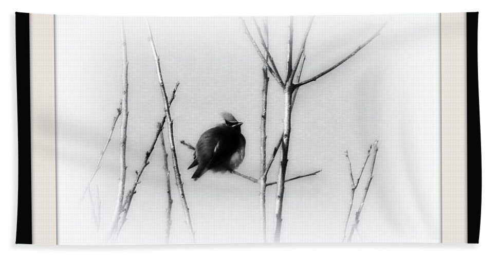 Cedar Waxwing Hand Towel featuring the photograph Cedar Waxwing - Black And White by Travis Truelove