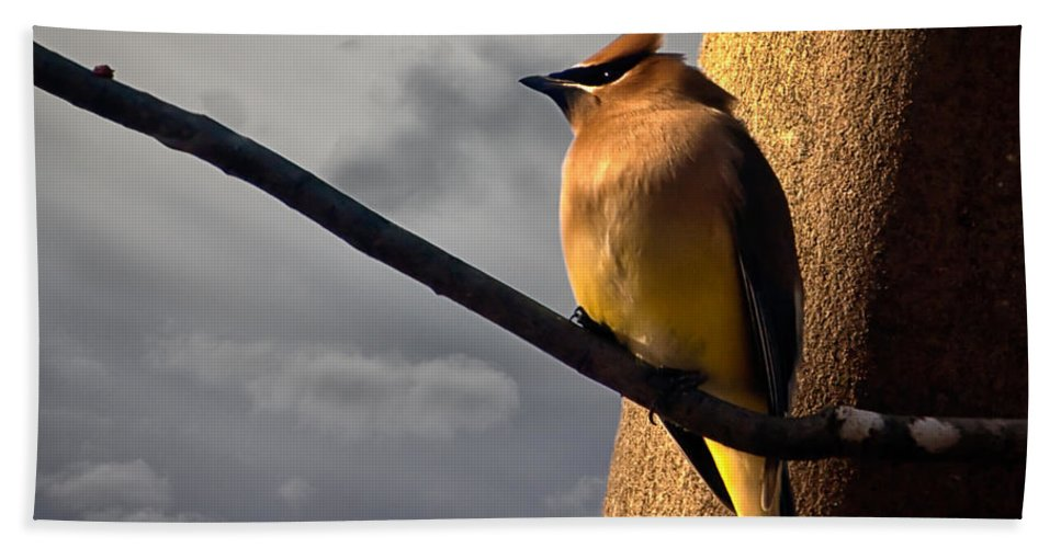 Cedar Waxwing Hand Towel featuring the photograph Cedar Waxwing by Bob Orsillo