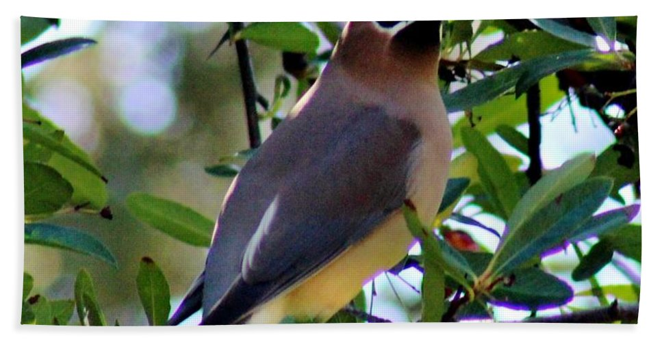Wildlife Hand Towel featuring the photograph Cedar Waxwing In Tree 030515a by Edward Dobosh