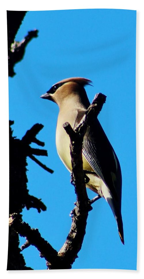 Wildlife Hand Towel featuring the photograph Cedar Waxwing In Tree 030515aaa by Edward Dobosh
