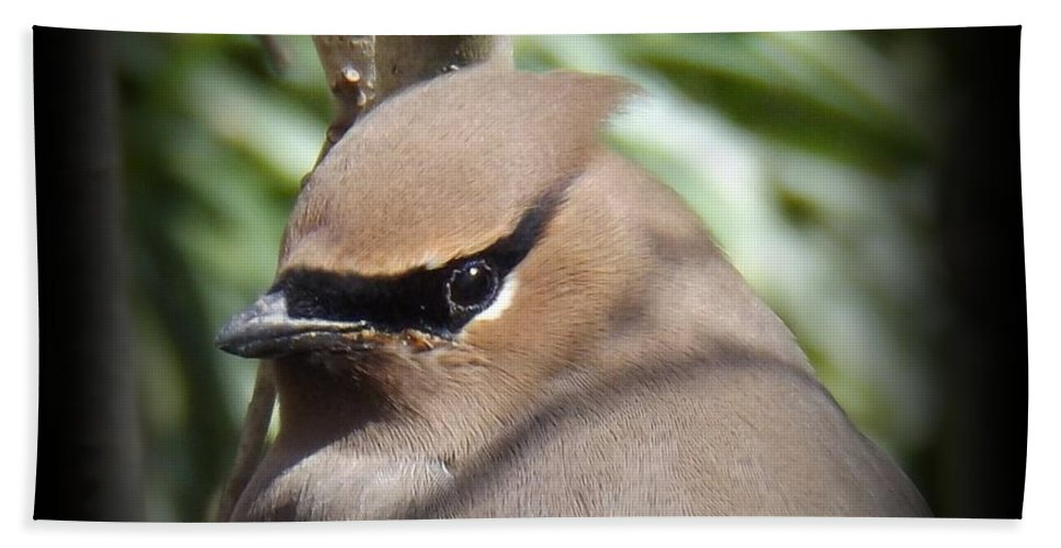 Profile Bath Sheet featuring the photograph Cedar Waxwing Profile by Sara Raber