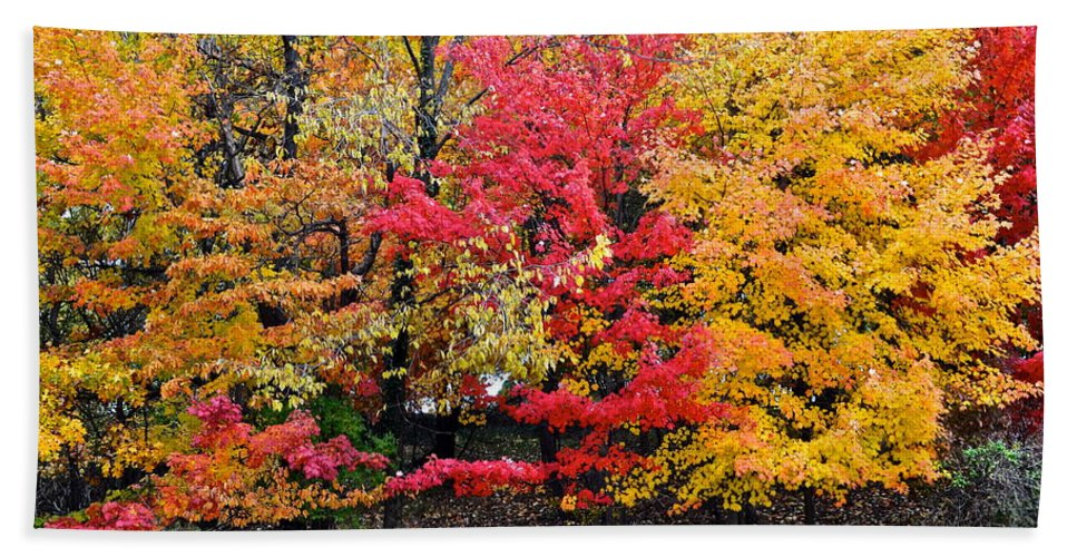 Landscape Hand Towel featuring the photograph Center Of Attention by Frozen in Time Fine Art Photography