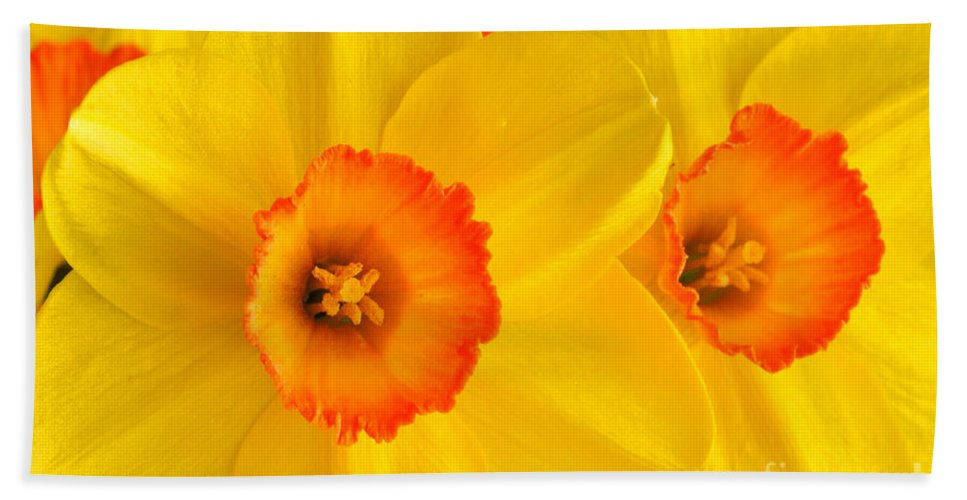Yellow Daffodils Bath Sheet featuring the photograph Ceylon Daffodils by Regina Geoghan