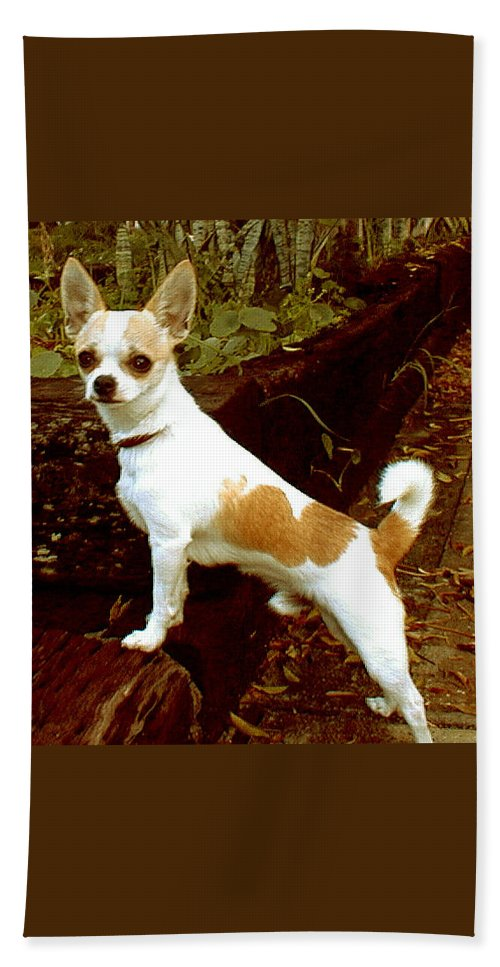 Chihuahua Hand Towel featuring the photograph Chachi Moto by Leah Delano