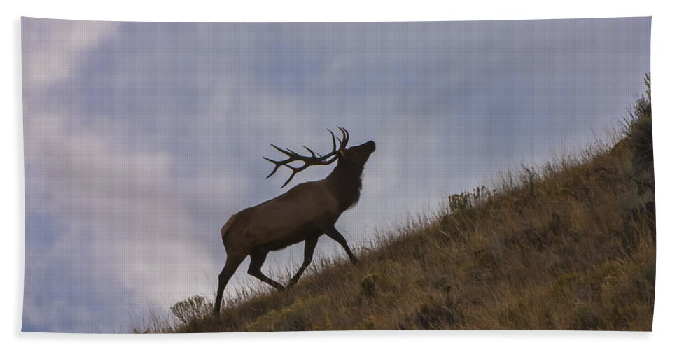 Wildlife Bath Sheet featuring the photograph Challenge Of The Bull Elk by Sandra Bronstein