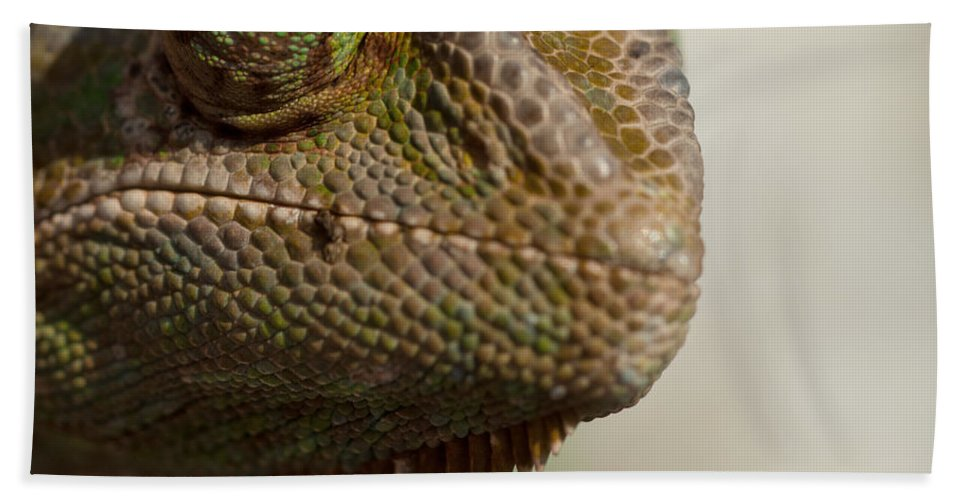 Chameleon Hand Towel featuring the photograph Chameleon by TouTouke A Y