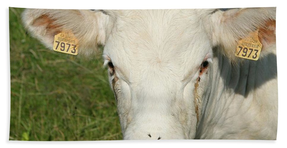 Cow Hand Towel featuring the photograph Charolais Cow by Christiane Schulze Art And Photography