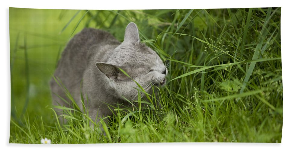 Cat Bath Sheet featuring the photograph Chartreux Cat And Grass by Jean-Michel Labat