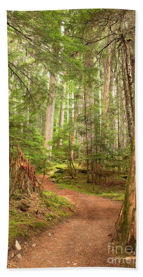Cheakamus Rainforest Bath Sheet featuring the photograph Cheakamus Lake Path by Adam Jewell