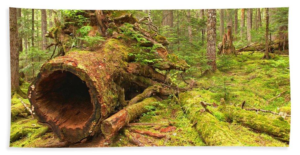 Old Growth Cedar Bath Sheet featuring the photograph Cheakamus Old Growth Cedar Stumps by Adam Jewell