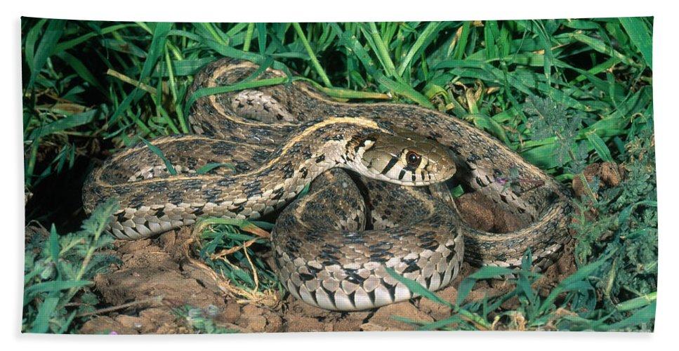 Checkered Garter Snake Hand Towel featuring the photograph Checkered Garter Snake by Anthony Mercieca