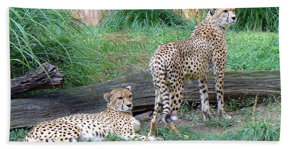 Wild Cats Hand Towel featuring the photograph Cheetah Brothers by Lingfai Leung