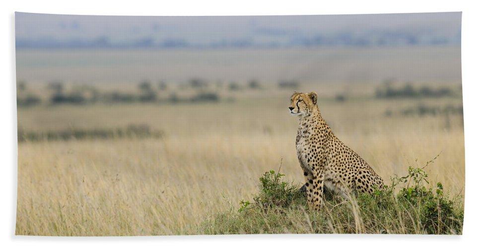 Acinonyx Jubatus Bath Sheet featuring the photograph Cheetah Perched On A Mound by John Shaw