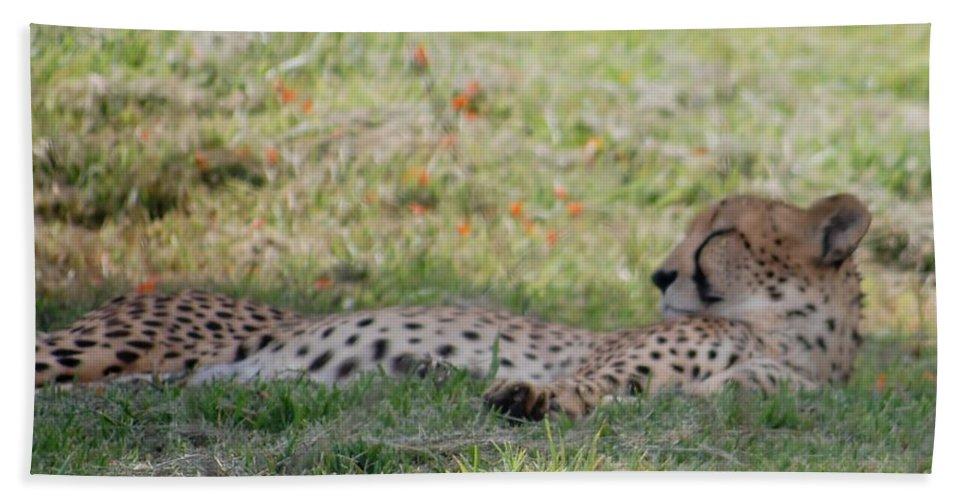 Cheetah Bath Sheet featuring the photograph Cheetah by Susan Garren