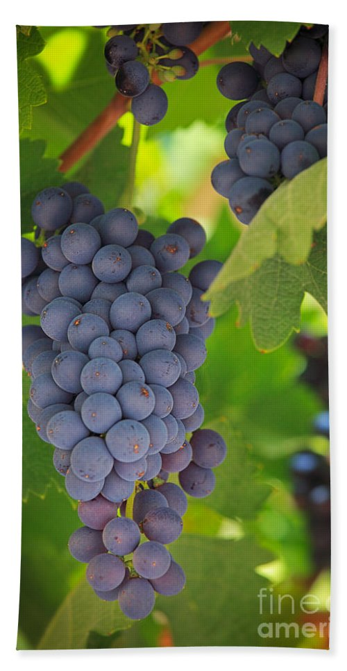 America Bath Sheet featuring the photograph Chelan Blue Grapes by Inge Johnsson