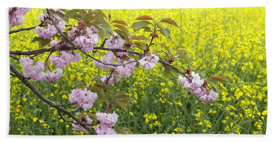 Floral Bath Sheet featuring the photograph Cherry Blossom And Rapeseed by Julie Woodhouse