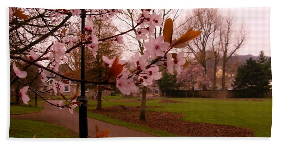 Cherry Blossoms Bath Sheet featuring the photograph Cherry Blossoms At Kirkland In Kendal by Joan-Violet Stretch