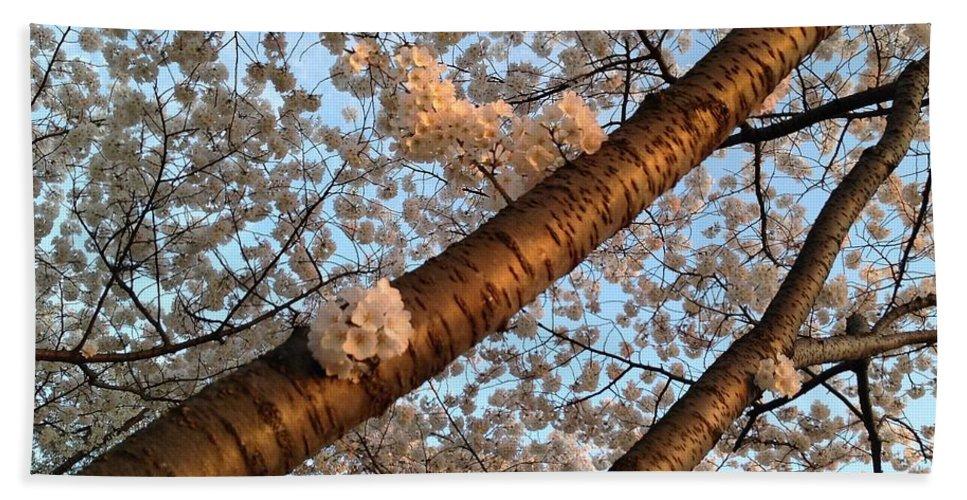 Washington Dc Bath Sheet featuring the photograph Cherry Blossoms by Lois Ivancin Tavaf