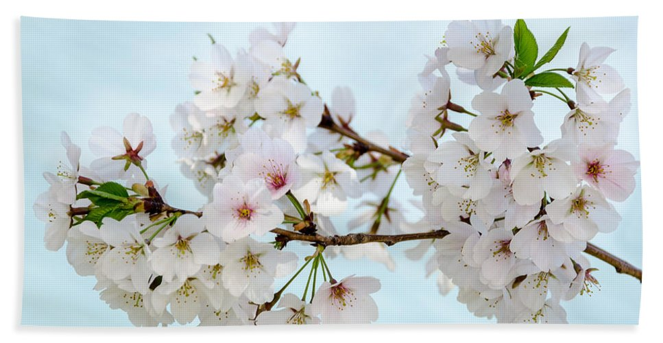 Dc Cherry Blossom Festival Bath Sheet featuring the photograph Cherry Blossoms No. 9146 by Georgette Grossman