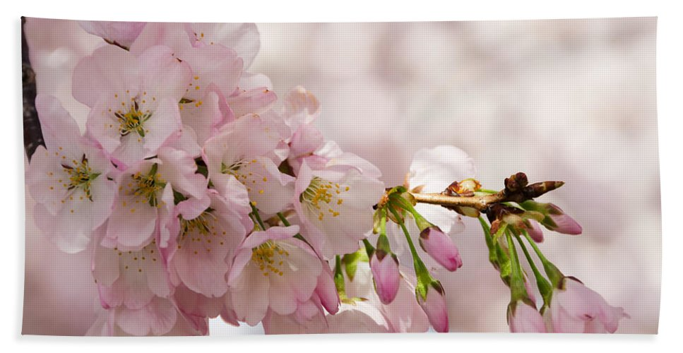 Dc Cherry Blossom Festival Bath Sheet featuring the photograph Cherry Blossoms No. 9164 by Georgette Grossman