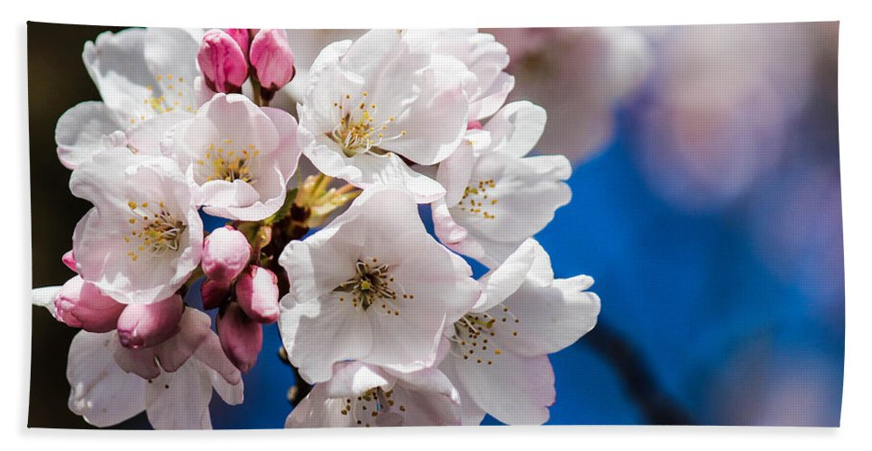 Cherry Blossoms Hand Towel featuring the photograph Cherry Blossoms by Patricia Babbitt