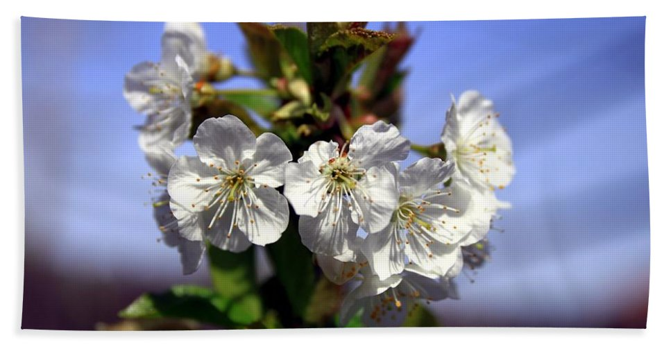 Cherry Blossoms Hand Towel featuring the photograph Cherry Blossoms by Scott Hill