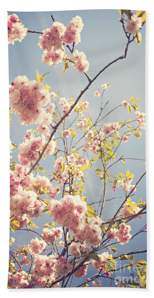 Prunus Serrulata Hand Towel featuring the photograph Cherry Blossoms by Sophie McAulay
