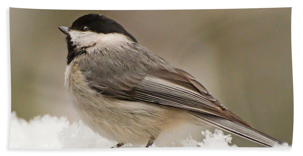 Bird Bath Sheet featuring the photograph Chickadee In The Snow by Kerri Farley