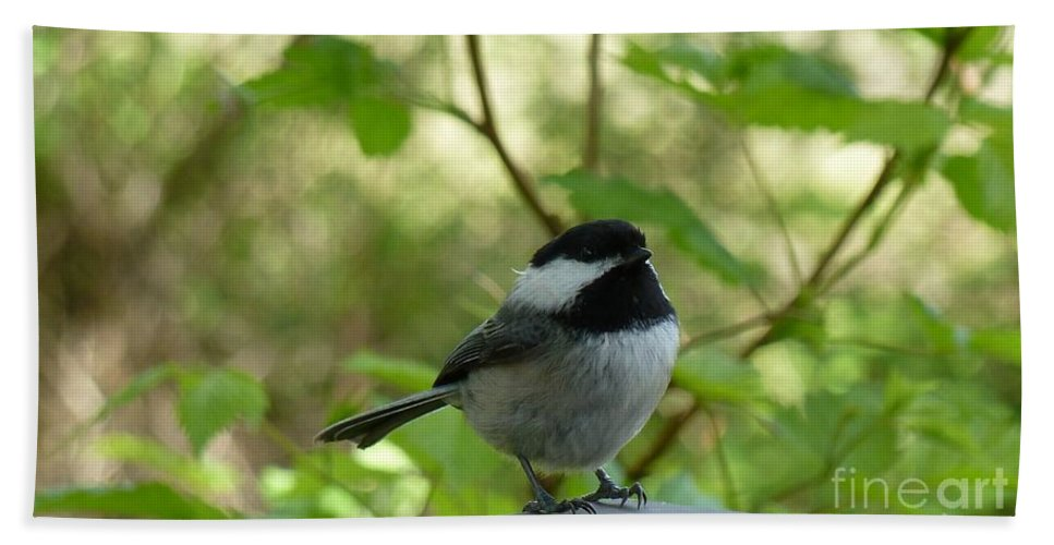 Chickadee Hand Towel featuring the photograph Chickadee by Lena Photo Art