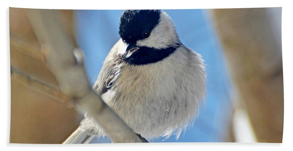 Chickadee Hand Towel featuring the photograph Chickadee On A Bright Day by Debbie Portwood
