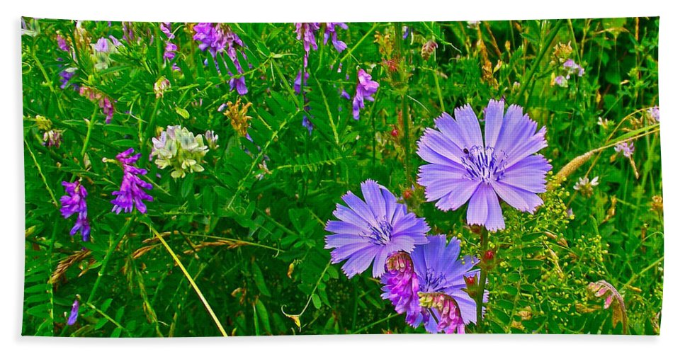 Chicory And Purple Vetch Along Rivier Du Nord In The Laurentians North Of Montreal Bath Sheet featuring the photograph Chicory And Purple Vetch Along Rivier Du Nord Trail In Laurentians-quebec by Ruth Hager