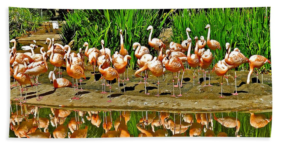 Chilean Flamingo Reflection In San Diego Zoo Safari Park In Escondido Bath Sheet featuring the photograph Chilean Flamingo Reflection In San Diego Zoo Safari Park In Escondido-california by Ruth Hager