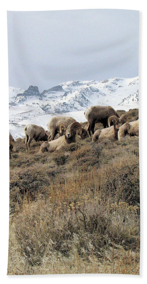 Nevada Hand Towel featuring the photograph Chimney Rock Rams by Darcy Tate