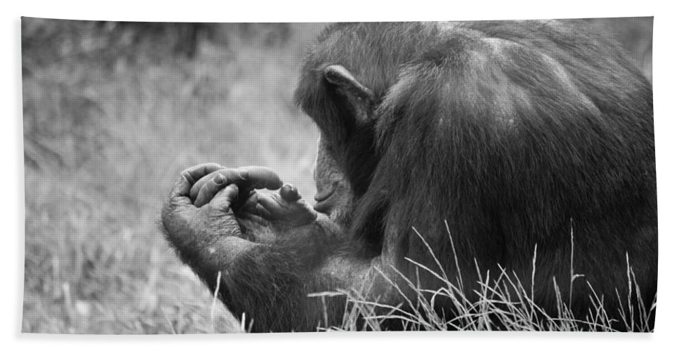 B&w Bath Sheet featuring the photograph Chimpanzee In Thought by Jonny D