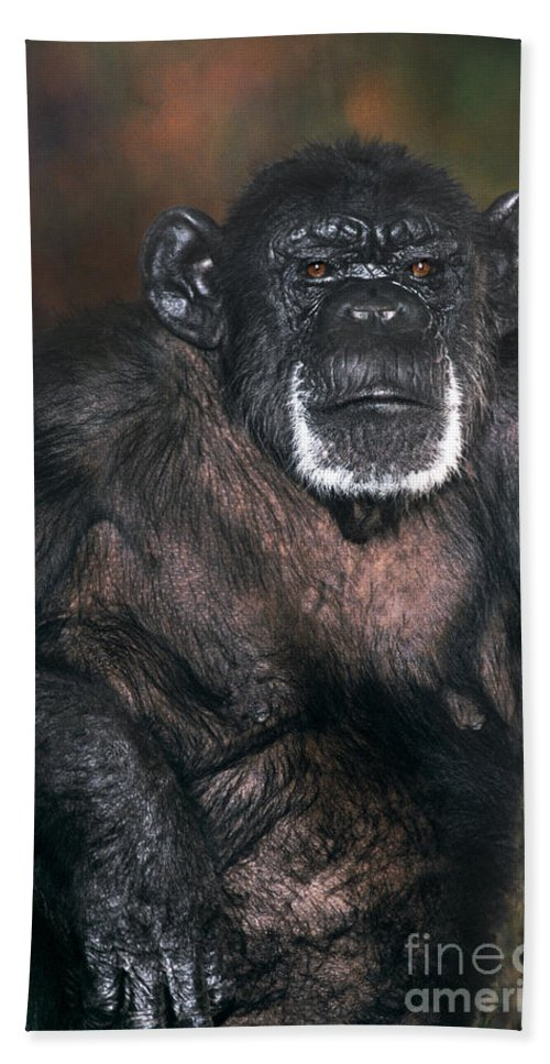 Chimpanzee Bath Towel featuring the photograph Chimpanzee Portrait Endangered Species Wildlife Rescue by Dave Welling