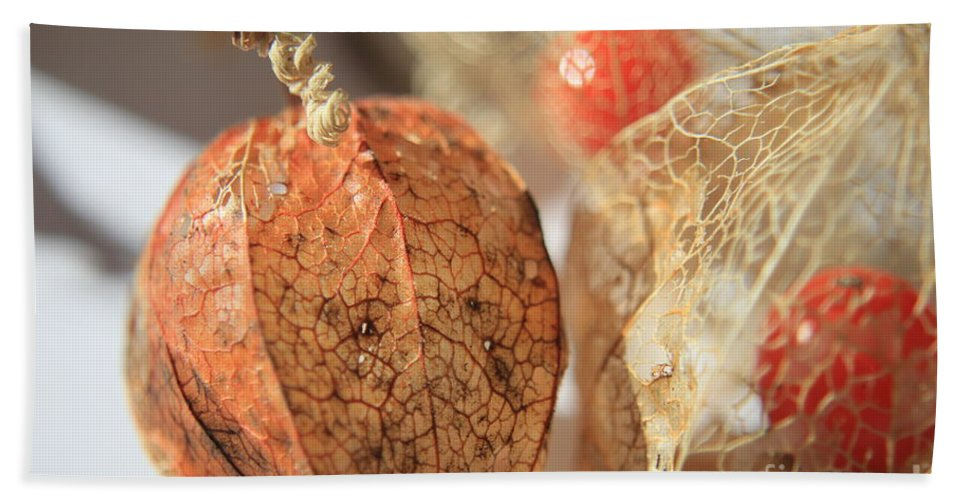 Plant Bath Sheet featuring the photograph Chinese Lantern Plant - D by Kenny Glotfelty
