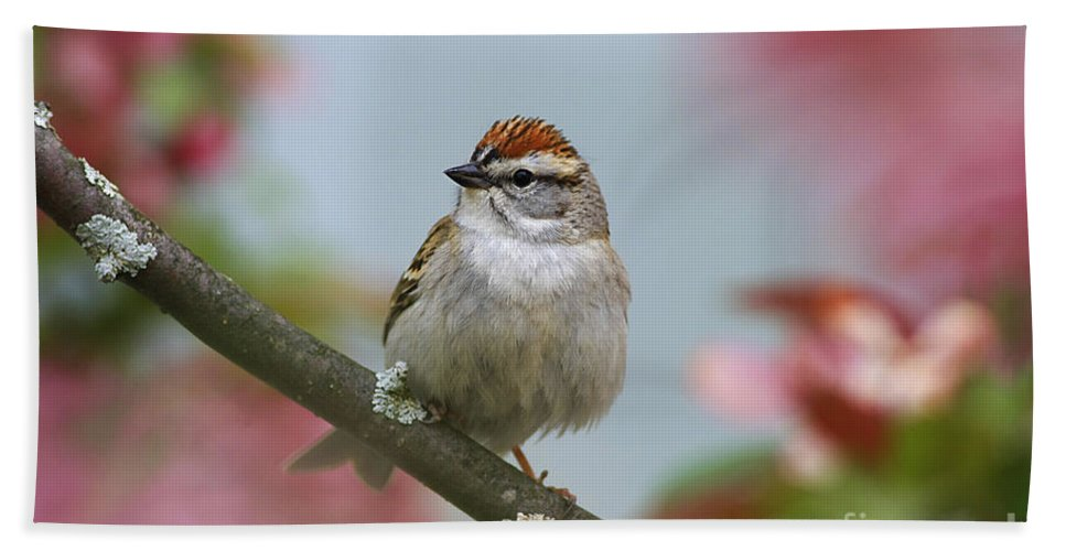 Bird Hand Towel featuring the photograph Chipping Sparrow In Blossoms by Deborah Benoit