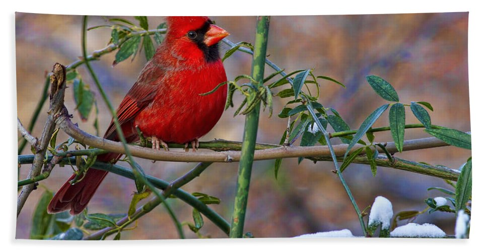 Hand Towel featuring the photograph Christmas Color by Gary Holmes