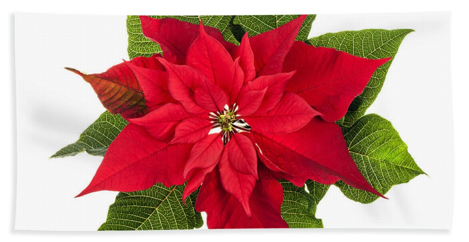 Poinsettia Hand Towel featuring the photograph Christmas Poinsettia by Elena Elisseeva