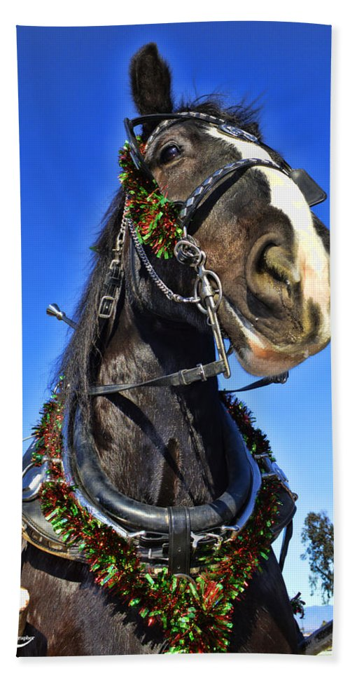 Draft Horse Hand Towel featuring the photograph Christmas Shire 2 by Tommy Anderson
