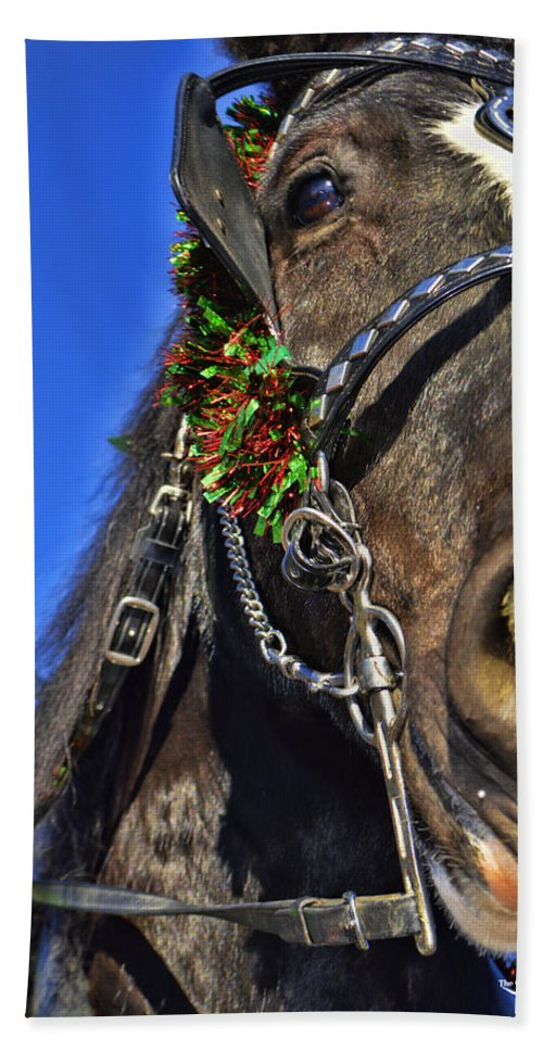 Draft Horse Hand Towel featuring the photograph Christmas Shire by Tommy Anderson