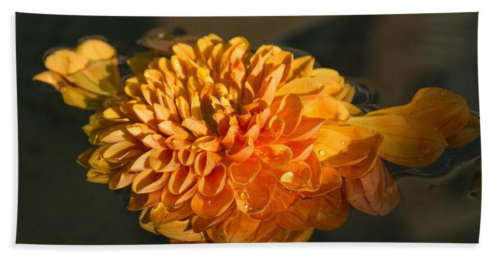 Georgia Mizuleva Hand Towel featuring the photograph Chrysanthemum Gently Floating In The Fountain Of Campo De Fiori - Rome - Italy by Georgia Mizuleva