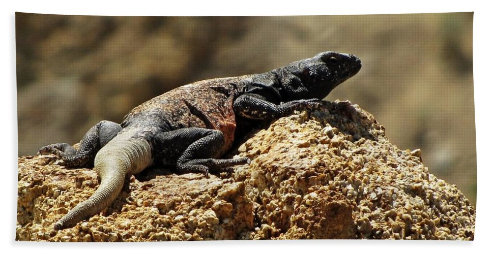 Chucka Walla Hand Towel featuring the photograph Chucka Walla Basking by Sheryl Young