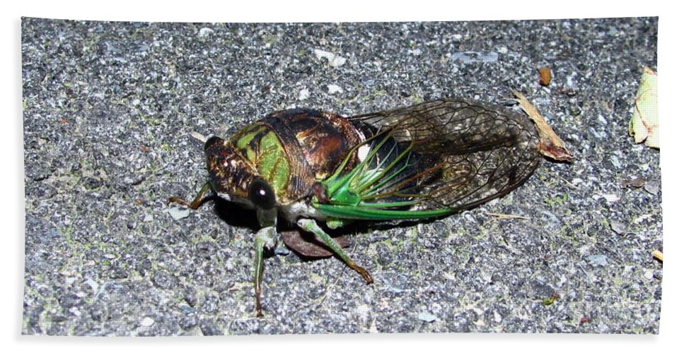 Cicada Images Cicada Pics Cicada Prints Insect Forest Sounds Entomology Biodiversity Food Chain Conservation Preservation Hand Towel featuring the photograph Cicada by Joshua Bales