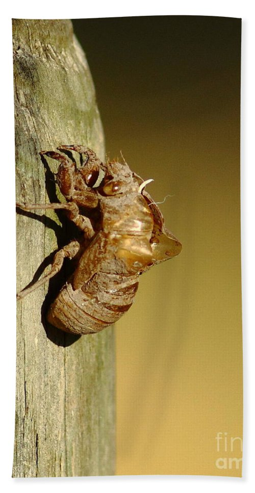 Animal Hand Towel featuring the photograph Cicada Shell by Robert Frederick