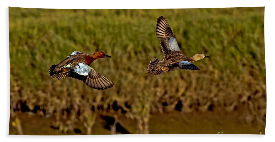 Anas Cyanoptera Hand Towel featuring the photograph Cinnamon Teal Pair In Flight by Anthony Mercieca