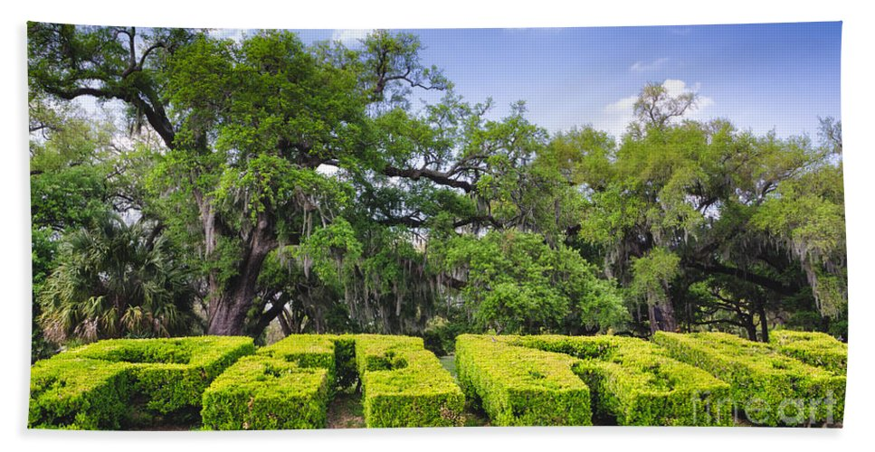 City Park Hand Towel featuring the photograph City Park New Orleans Louisiana by Kathleen K Parker